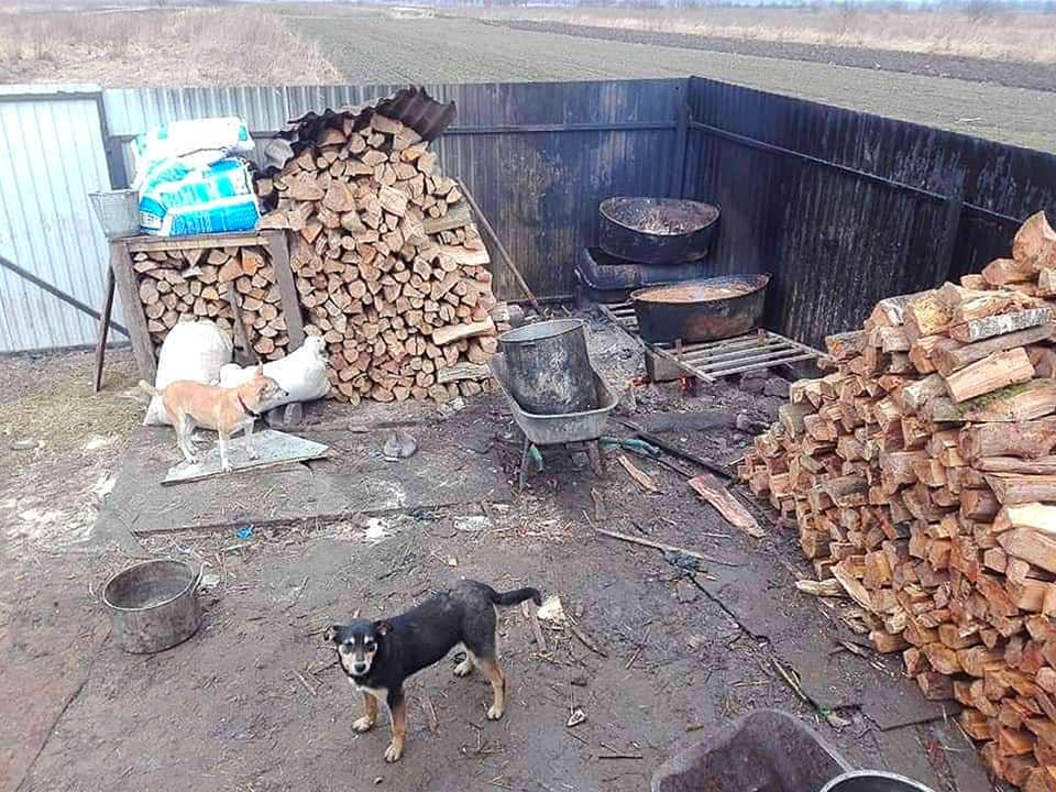 """""""Дім Сірка"""" просить допомогти з дровами, аби готувати їжу для собак"""