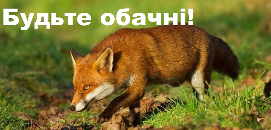 У центрі Франківська виявили скажену лисицю, на кількох вулицях введений карантин