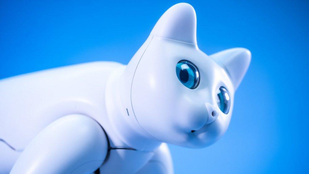 Проявляє емоції та реагує на команди: китайські винахідники створили кішку-робота (ФОТО, ВІДЕО)