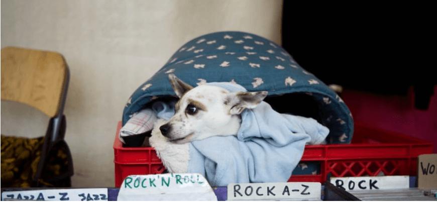 Spotify створили плейлист для домашніх тварин, які часто залишаються самі