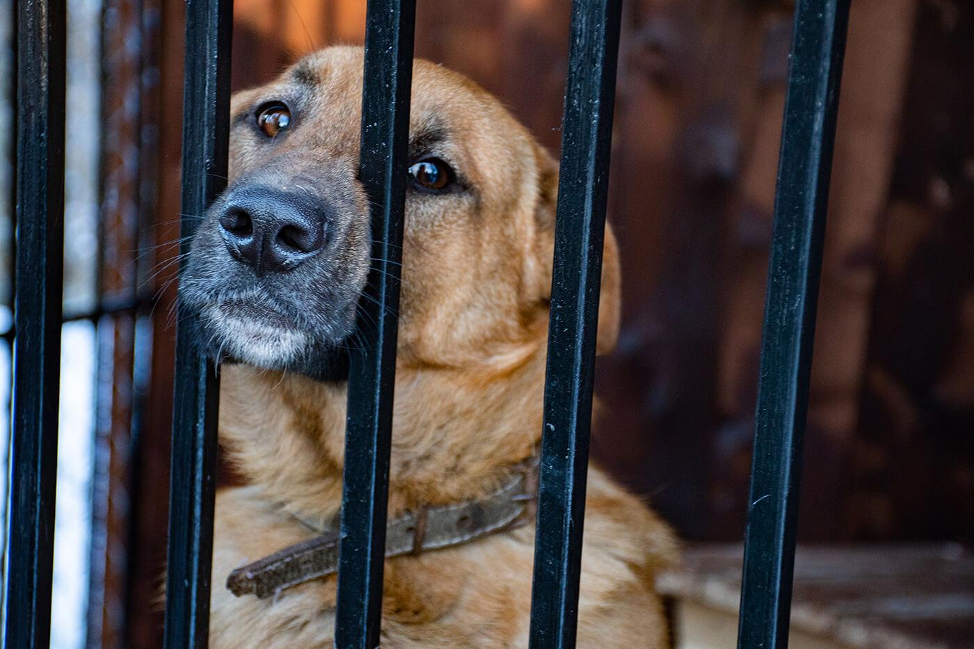 Комунальний пункт перетримки безпритульних тварин запрацював у Франківську (ФОТО)