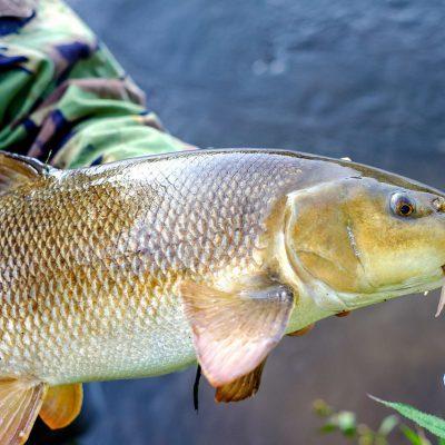 """На Тлумаччині рибпатрульні знайшли 800 метрів браконьєрських сіток з """"червонокнижною"""" рибою (ФОТО)"""