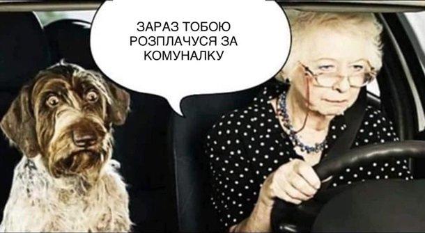 """Нардеп від """"Слуги народу"""" порадив пенсіонерці """"продати собаку"""", щоб сплатити за комуналку (ВІДЕО)"""