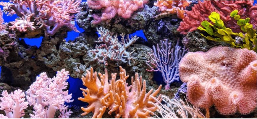 Через глобальне потепління до 2040 року зникнуть 90% коралових рифів − дослідження