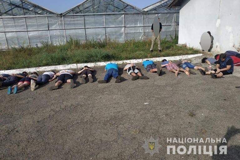 Судитимуть 17 осіб: поліція завершила розслідування щодо рекордної плантації коноплі на Прикарпатті (ФОТО)
