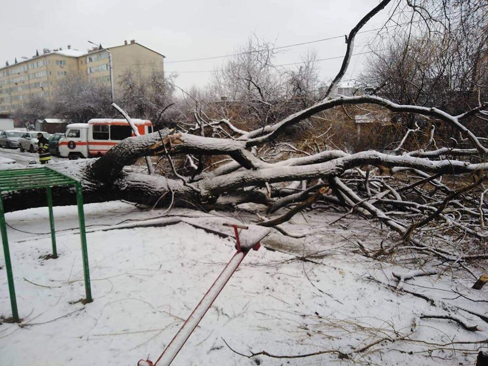 На вулиці Миру негода повалила дерево поблизу дитмайданчика (ФОТОФАКТ)
