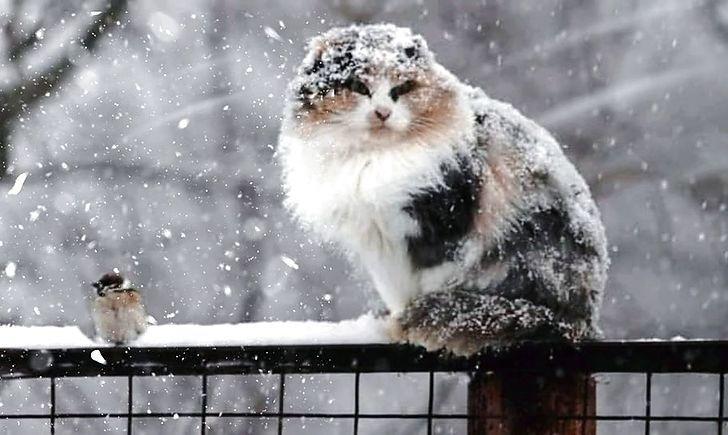 На Франківщину сунуть шквали, дощі та мокрий сніг, у Карпатах – хуртовина