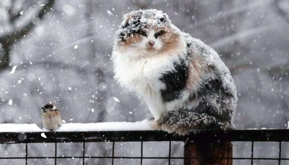 У вихідні на Прикарпатті очікують похолодання та сніг