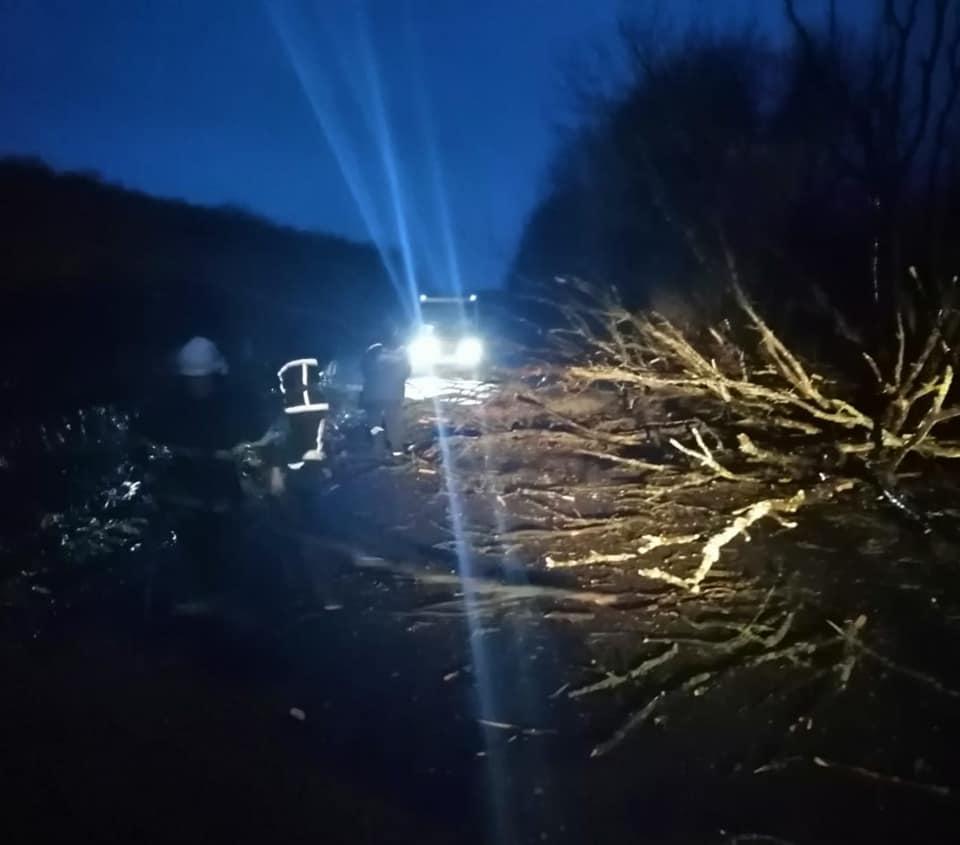 У Хом'яківці дерево впало на автобус з пасажирами, є травмований (ФОТОФАКТ)
