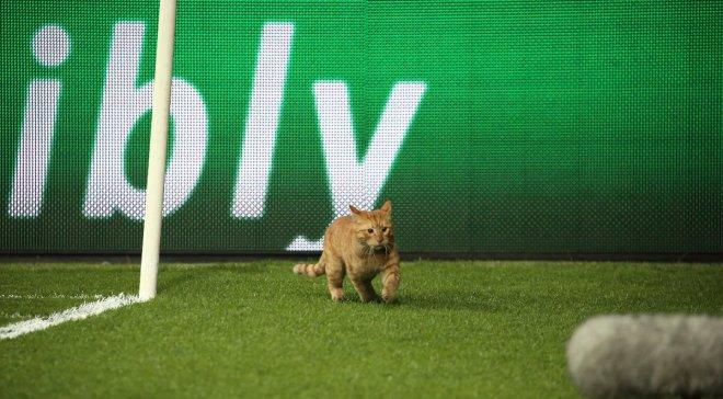 Одинокий кіт на трибуні під час футбольного матчу став хітом мережі (ВІДЕО)