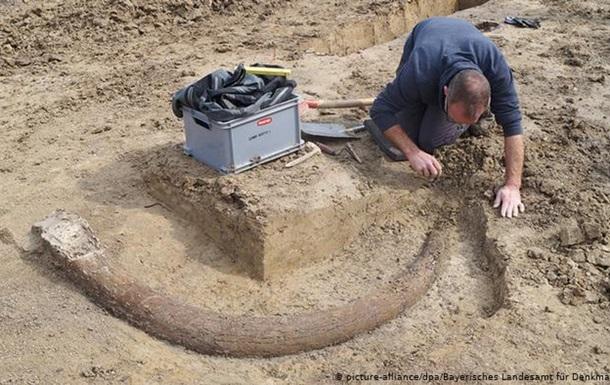 У Німеччині знайшли бивень мамонта завдовжки 2,5 метри