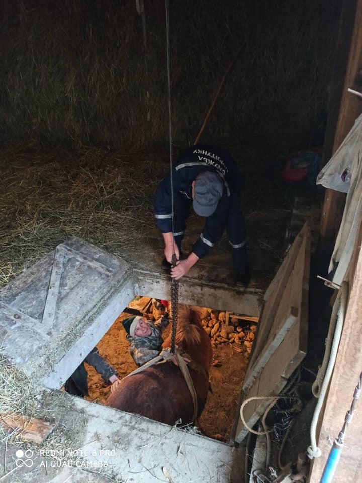 На Коломийщині провели спецоперацію порятунку коня з погреба (ФОТО)