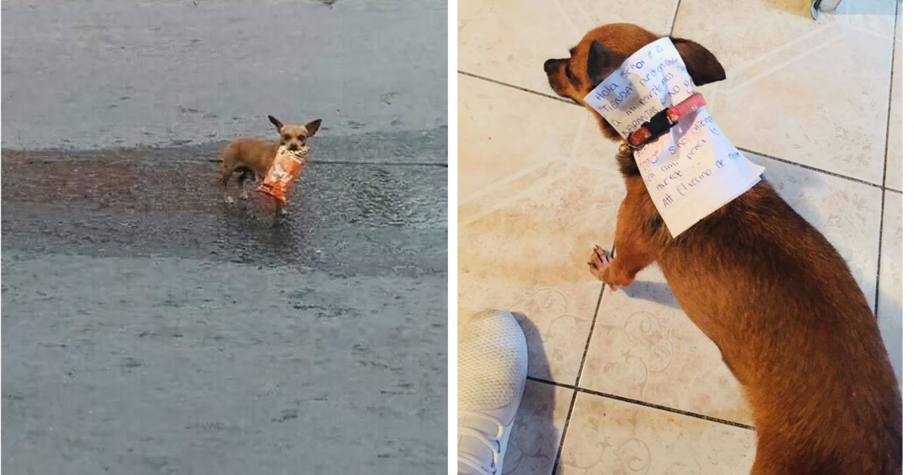 Мексиканець на карантині змусив пса сходити по чіпси до магазину (ФОТО)