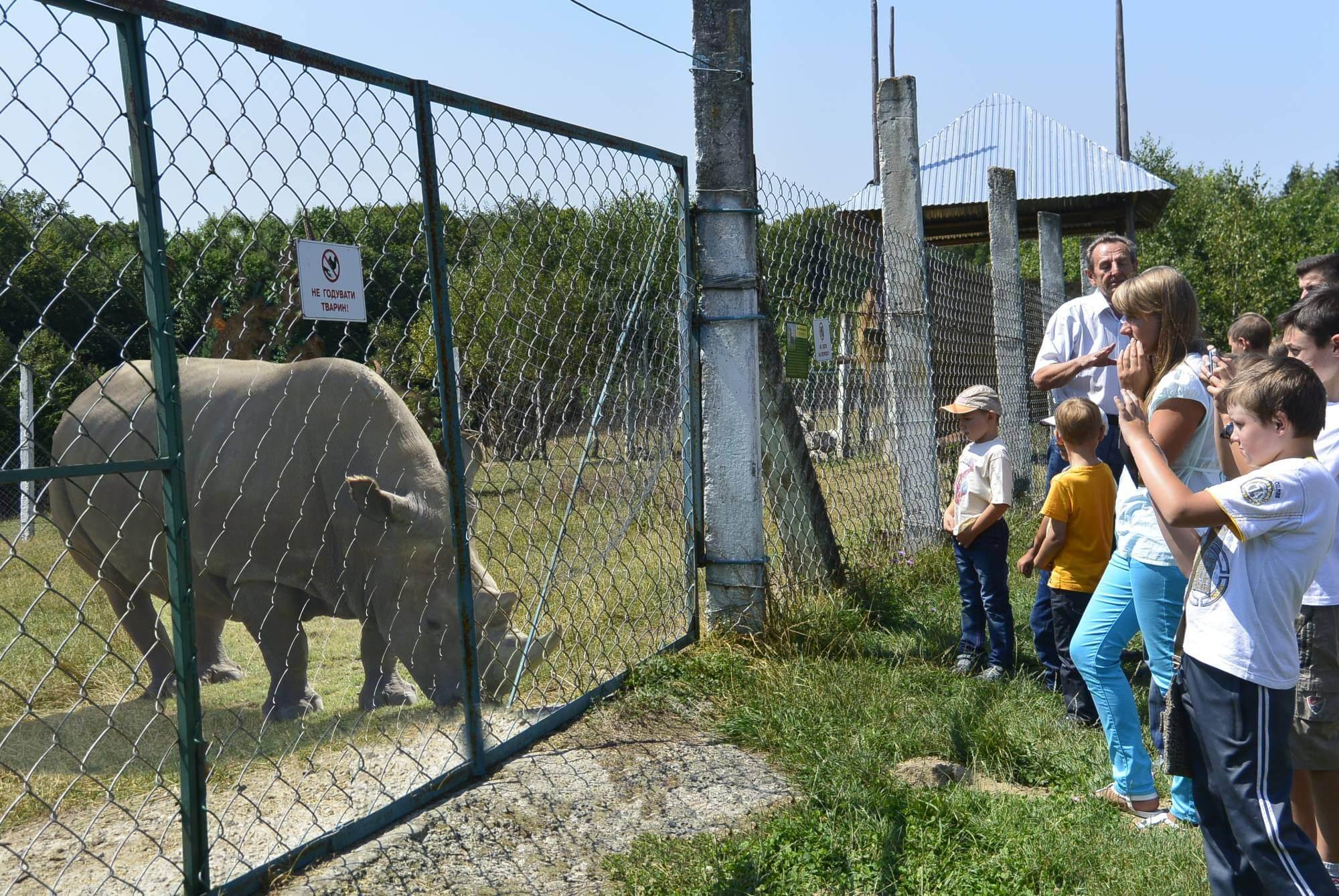 У Галицькому природному парку поселили носорога (ФОТО)
