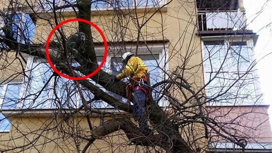 Франківські МАРСіани зняли з дерева шимпанзе (ФОТОФАКТ)