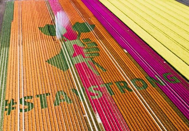 """""""Побачимось наступного року"""": на квіткових полях у Нідерландах створили підбадьорливі написи для мандрівників"""