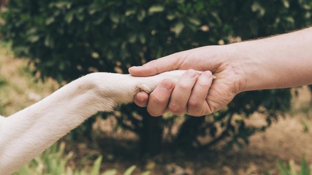 """У """"Домі Сірка"""" небайдужих закликають допомогти ліками для поранених собак"""