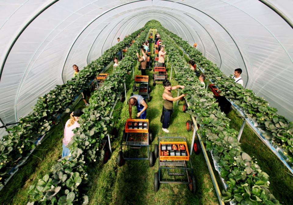 Бракує сезонних працівників: Чехія частково відновлює видачу віз для українців