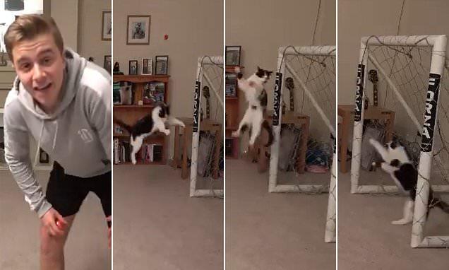 Відео з котом-воротарем, яке підірвало соцмережі, виявилося фейком