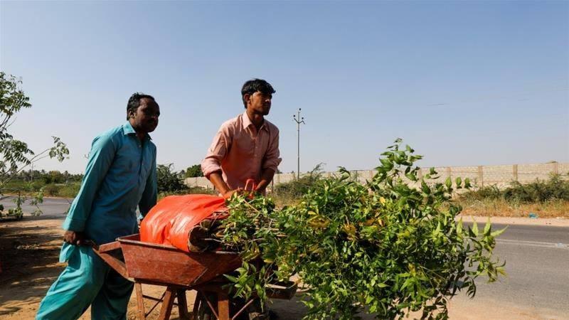 Пакистан планує висадити 10 мільярдів дерев для боротьби з кліматичною кризою.