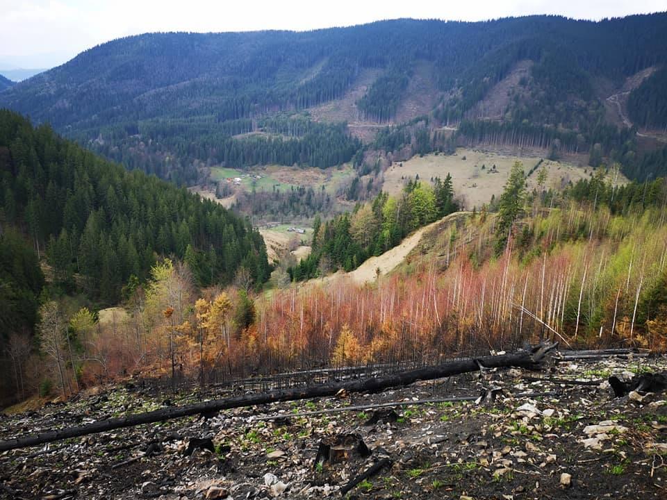 """""""Випалена та мертва земля"""": як виглядає спалений ліс на Верховинщині (СУМНІ ФОТО)"""