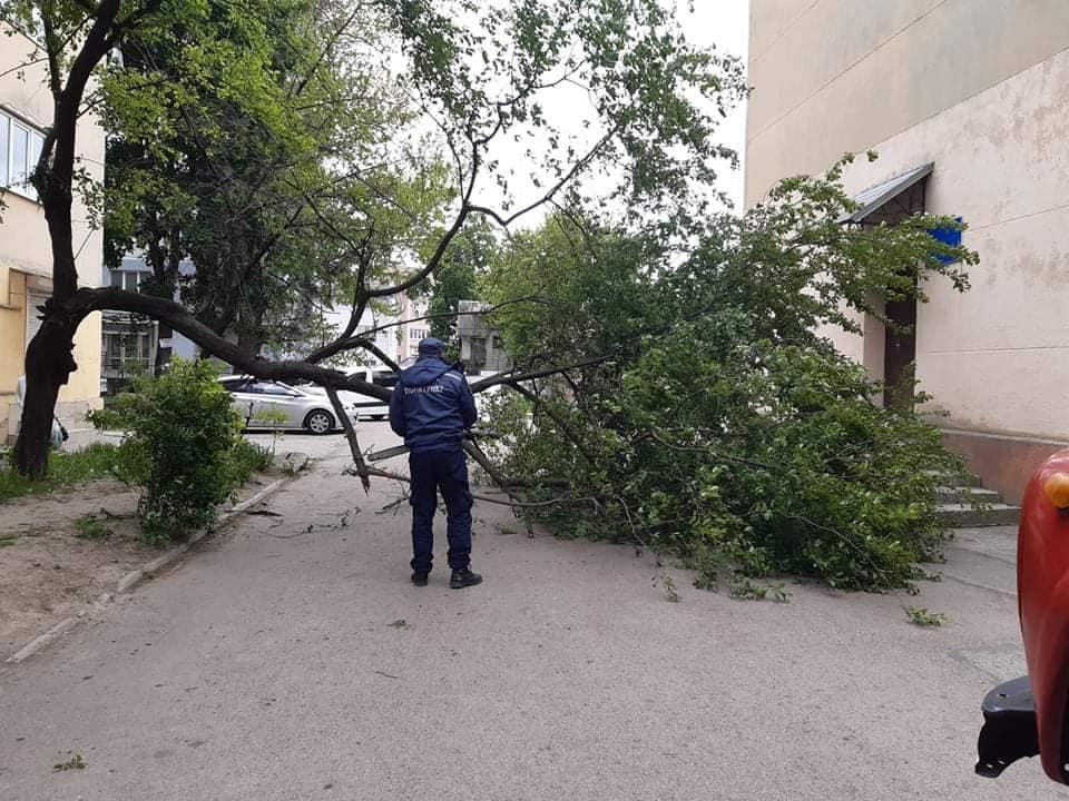 Потужний вітер на кількох вулицях Івано-Франківська повалив дерева (ФОТО)