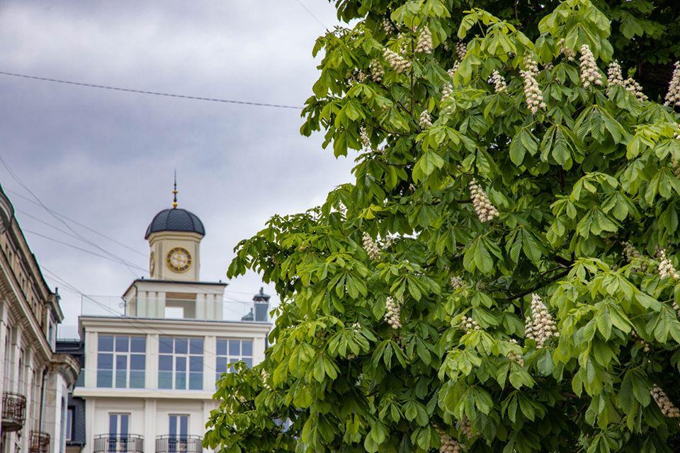 """""""Франківськ – столиця каштанів"""": фотограф поділився світлинами квітучих дерев (ФОТО)"""