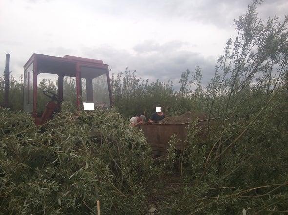 Крадіїв будматеріалу спіймали на Снятинщині (ФОТО)