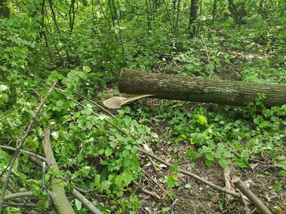 У Галицькому районі спіймали 5 осіб, які крали ліс (ФОТО)