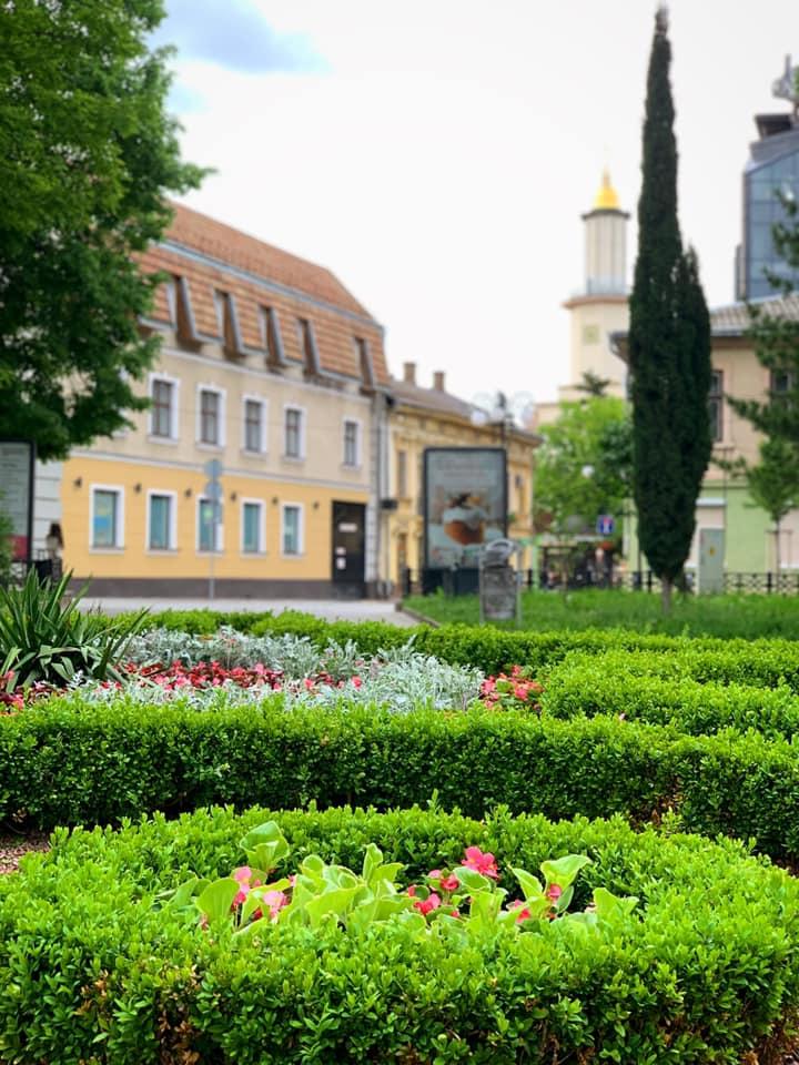 В центрі міста завершили висадку весняних квітів (КРАСИВІ ФОТО)