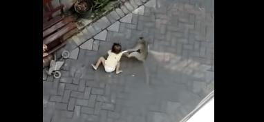 В Індонезії мавпа на крихітному мотоциклі спробувала викрасти дитину (ВІДЕО)