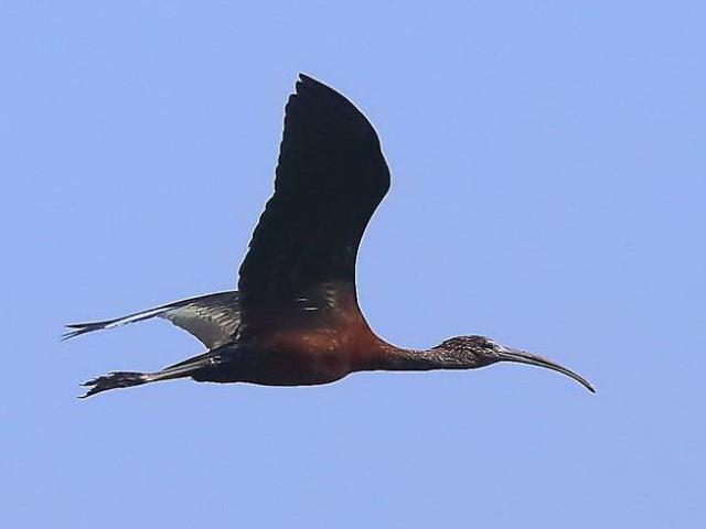 У Галицькому районі зафіксували міграцію рідкісних птахів (ВІДЕО)