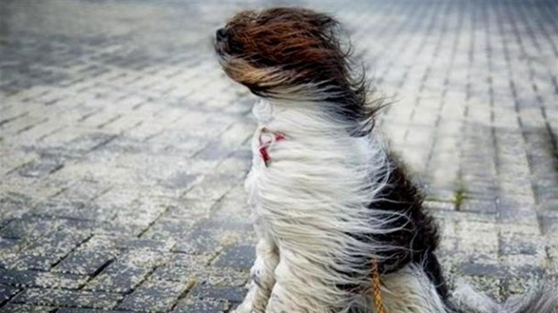 Штормовий вітер пронесеться Франківщиною