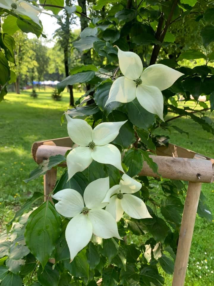 Екзотична рослина розцвіла в парку Шевченка (ФОТО)