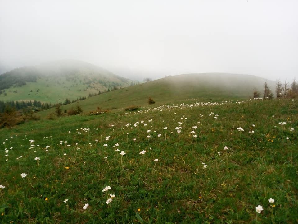 Рідкісні квіти знайшли на Прикарпатті (ФОТО)
