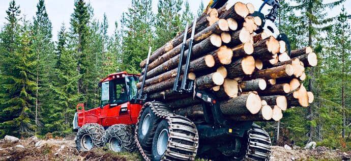 Вирубка лісу: на Прикарпатті порушники завдали збитків на понад 600 тисяч гривень