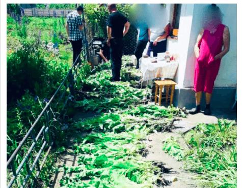 У прикарпатки на городі виявили 300 рослин снодійного маку (ФОТО)