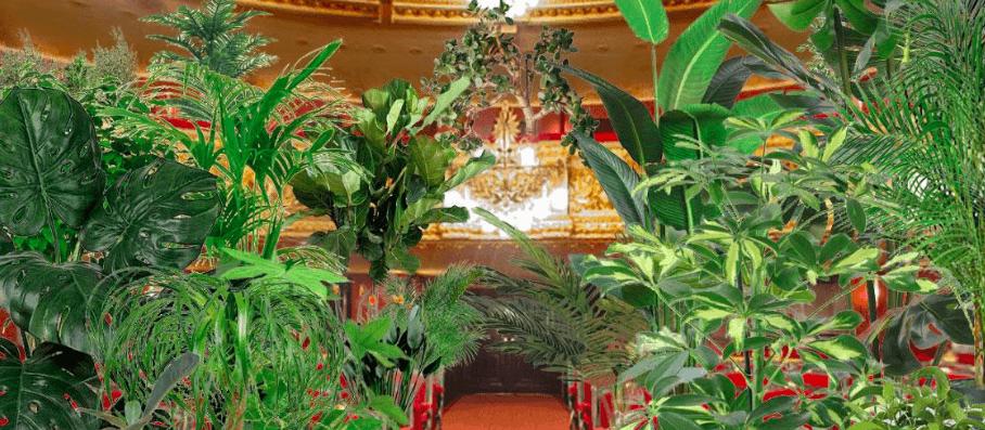 Оперний театр Барселони проведе перший концерт після карантину для рослин (ВІДЕО ОНЛАЙН)