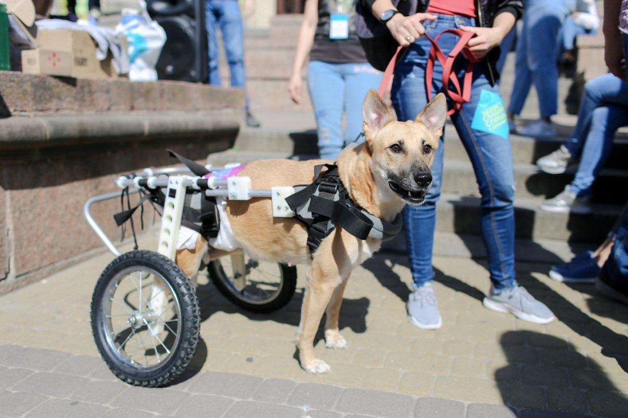 Небайдужих просять допомогти тваринам з інвалідністю