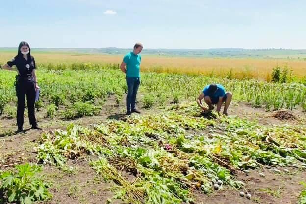 На Городенківщині в жінки знайшли сотні незаконних рослин (ФОТО)