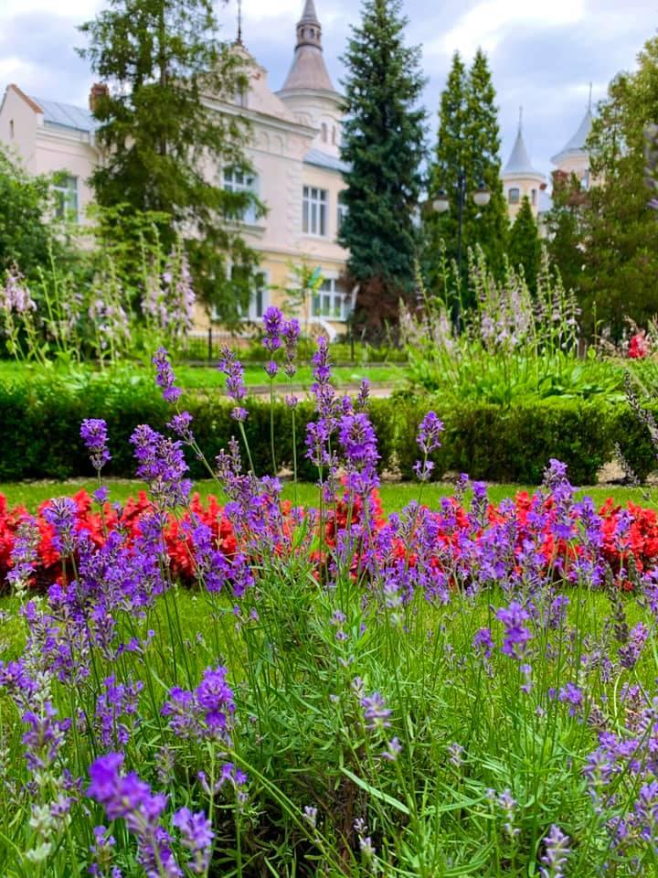 Лавандово-трояндовий парк: в мережі з'явилась світлина заквітчаного франківського парку (ФОТО)