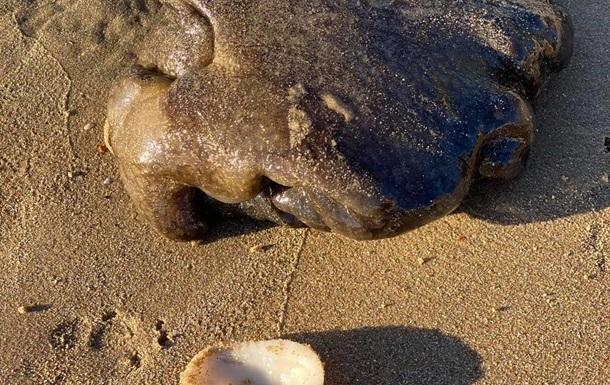 """""""Дивний потворний клубок"""": в Австралії знайшли невпізнану морську істоту (ФОТО)"""