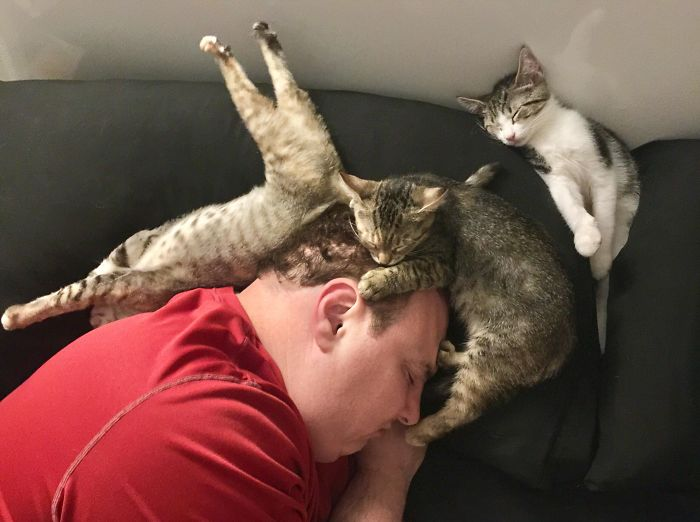 Як кумедно і винахідливо коти можуть спати разом (ФОТО)