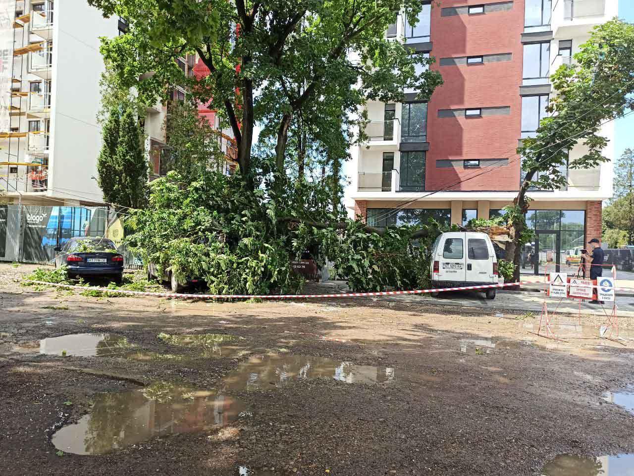 Штормова злива повалила дерева у Франківську – є пошкоджені авто (ФОТО)