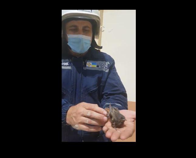 У Музеї мистецтв Прикарпаття врятували з пастки пташку (ФОТО, ВІДЕО)