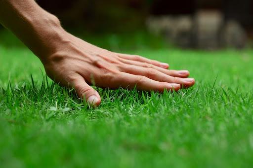 Прикарпатський підприємець заплатить 850 гривень штрафу за нескошену траву