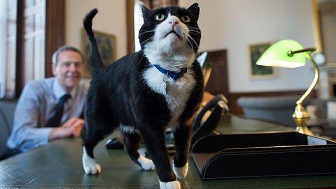Кіт, який працював у британському МЗС, офіційно вийшов на пенсію