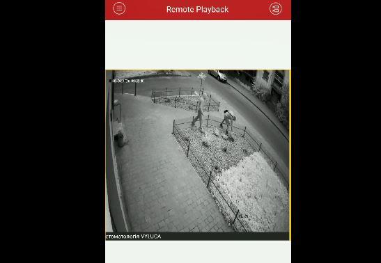 На Бельведерській невідомі дві ночі обкрадали клумби – крадіїв просять опізнати (ВІДЕО)
