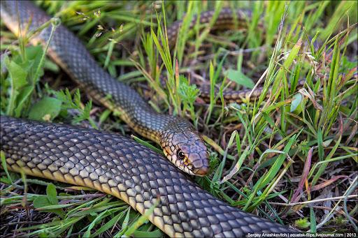 У центрі Франківська знайшли змію