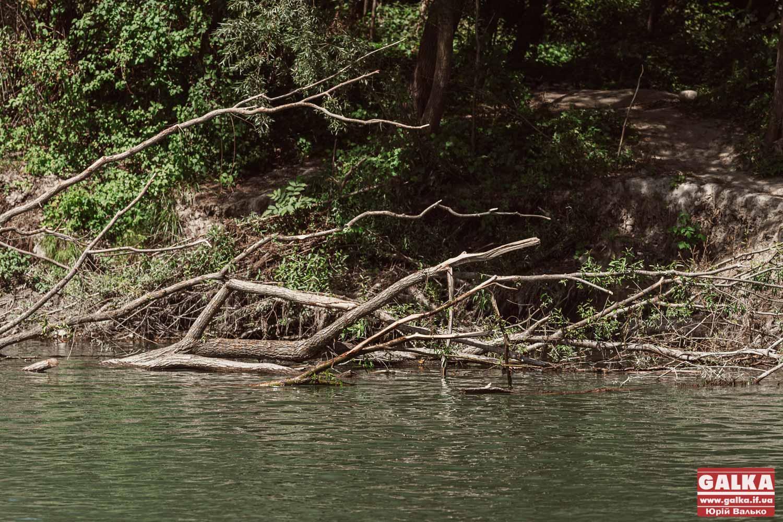 Фахівці назвали три найчистіші та одну найбруднішу річку Прикарпаття